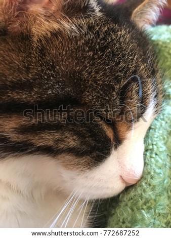 Cute pet cat #772687252