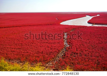 Red beach is located in Liaoning, the northeast China. This is the biggest wetland featuring the red plant of Suaeda salsa in the world. #772848130