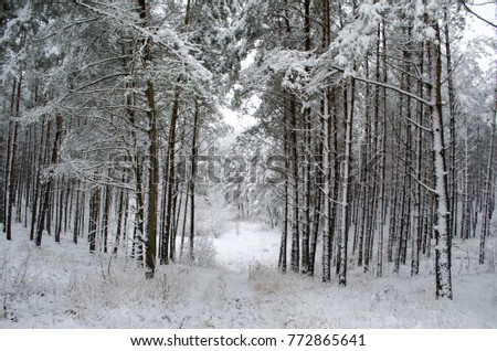 snowy road in the forest in winter #772865641