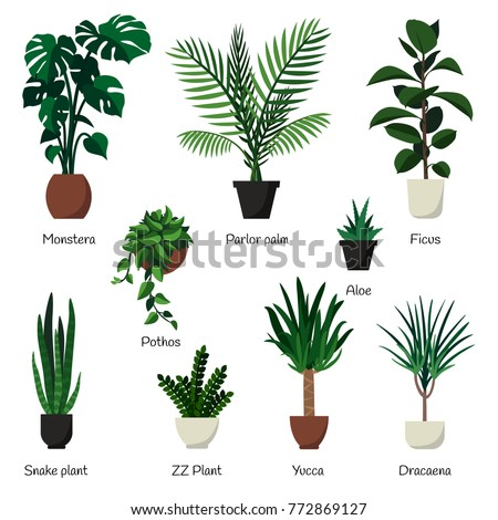 Vector isolated set various indoor ornamental plants with names. Most common and popular houseplants : monstera, parlor palm, ficus, rubber plant, pothos, aloe, snake plant, zz plant, yucca, dracaena