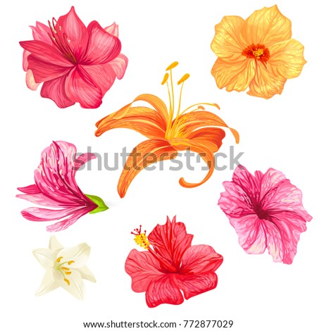 Set of vector illustrations of tropical hibiscus flowers and lilies with pink, red, orange and white petals isolated on a white background in a realistic style. Template, design elements, print. #772877029