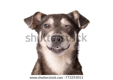 Closeup portrait photo of an adorable mongrel dog isolated on white #773293051