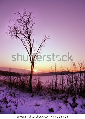 Lonely tree in winter sunset