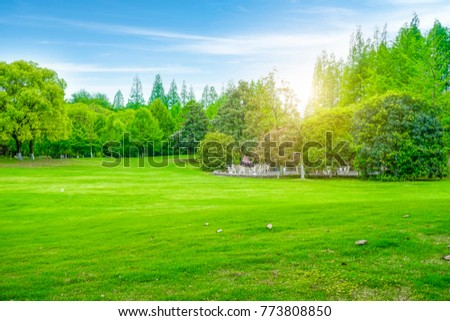 Beautiful outdoor woods and lawns #773808850
