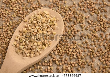 Buckwheat porridge. Wooden spoon. Brown background. Cereal sprouts. #773844487