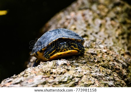Turtle on a log #773981158