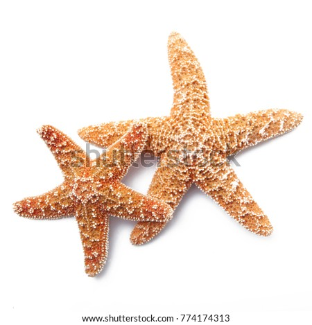 two starfish on white background #774174313