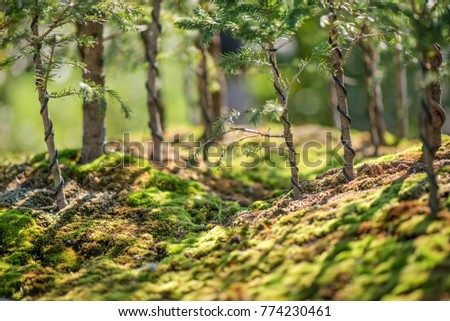 Bonsai trees and green moss in Japanese garden. Romantic sunset above small forest.