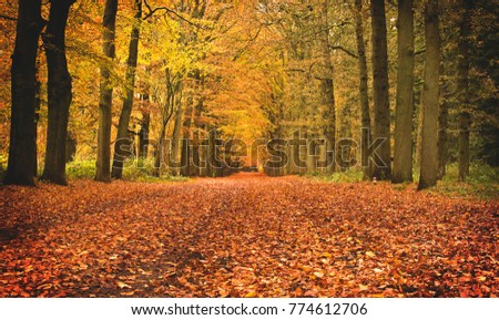 Autumnal forest lane.  #774612706