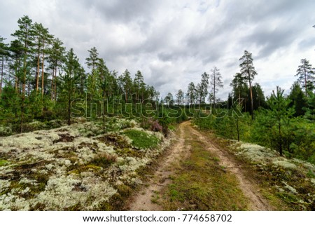 empty road in the countryside with trees in surrounding. perspective in summer. gravel surface in latvia #774658702