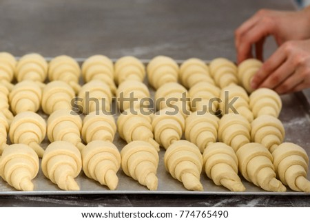 Crescent rolls before baking. Worker is placing croissants on a tray and baking it in the oven. Pastry goods, bakery, patisserie shop. #774765490