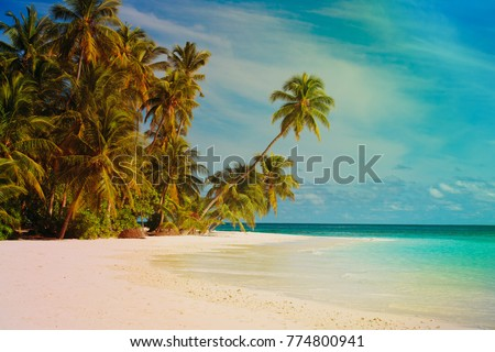 tropical sand beach with palm trees #774800941