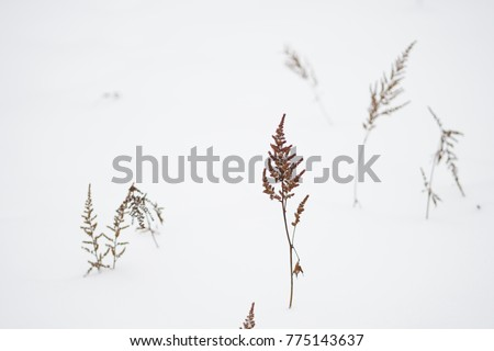 dry grass in the snow #775143637