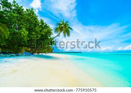 Palm and tropical beach #775910575