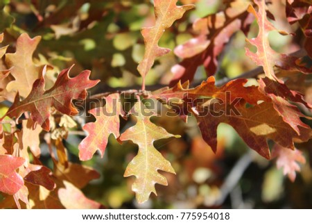 Red-green leaves on the branches.Macro. USA. #775954018