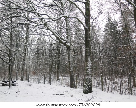 Snow covering trees in Wild Winter Landscape in layby in Northern Germany #776209699