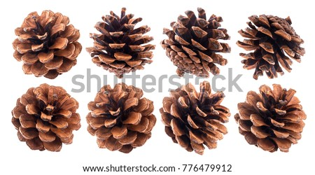 Fir cones isolated on white background closeup Royalty-Free Stock Photo #776479912