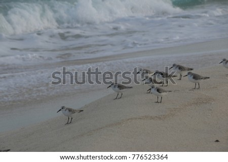 birds at the sandy beach in front of the ocean #776523364