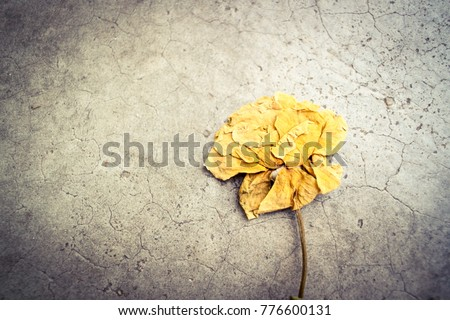 The dry yellow rose on crack cement background.