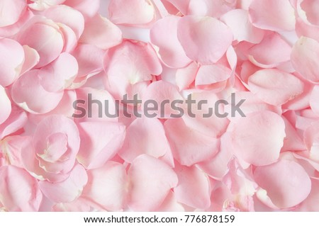Roses petals background  Royalty-Free Stock Photo #776878159