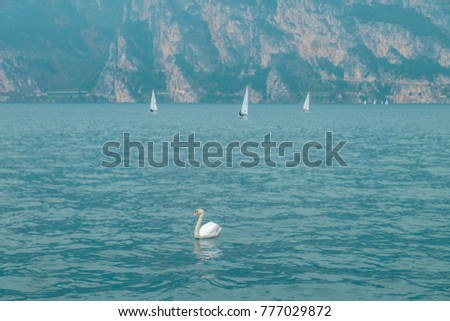 A swan on Lake Garda. A sailboat and a swan. Italy. #777029872