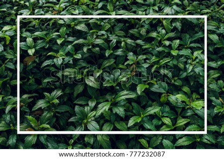 Creative layout made of green leaves. Nature background.  Flat lay.  #777232087