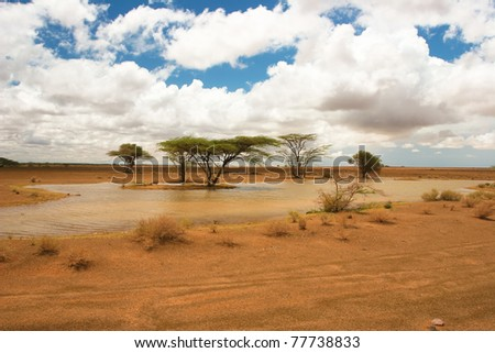 View of landscape with african trees in the background, Kenya