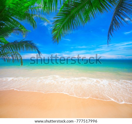 Palm and tropical beach #777517996
