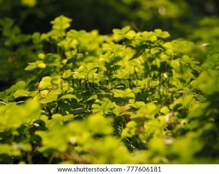 The fresh green grass under the warm sunlight #777606181
