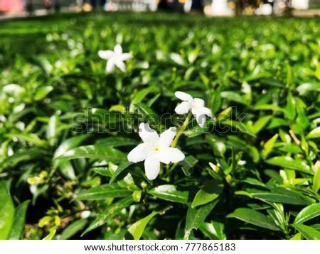 Flowers, white flowers #777865183