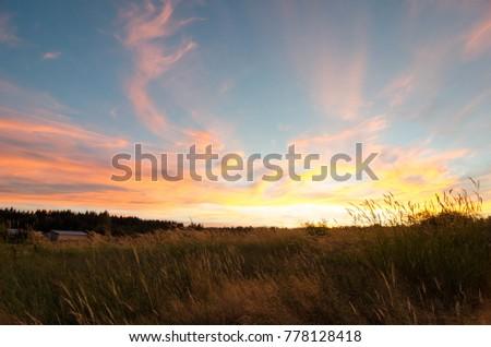 Summer Field Sunset #778128418