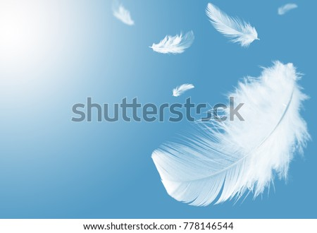Light fluffy a white feathers floating in the sky with copy space. Feather abstract. Freedom concept background. Royalty-Free Stock Photo #778146544