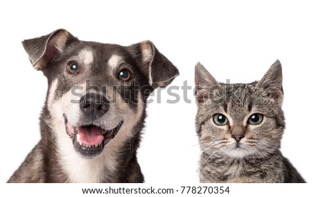 Cat and dog looking in the camera on a white background