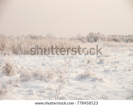 Christmas fairy tale snow scenary. Hillocky fields or swamp. Winter cloudy landscape with snow on the ground and frost on reeds and branches of bushes. Royalty-Free Stock Photo #778458523