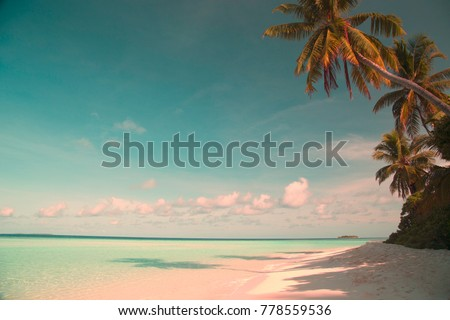 Palm trees on the ocean, white sand and turquoise water, light clouds in the sky above the horizon line, peace and quiet of the tropical island. Tinting under the film.