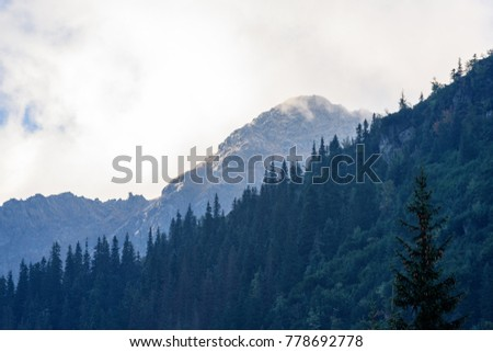 western carpathian mountain tops in  autumn covered in mist or clouds. panoramic view from a distance #778692778