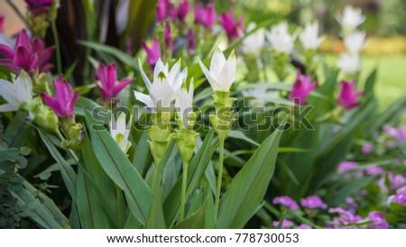 White flowers in the green garden #778730053