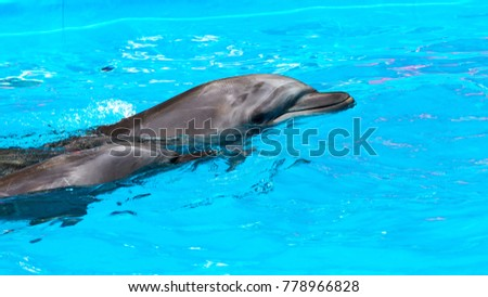 dolphins swimming in the clear blue water of the pool closeup #778966828