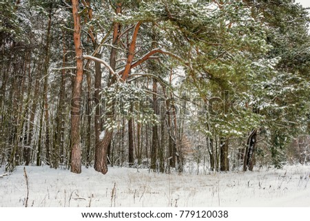 Beautiful winter landscape with big snow. Nature in the vicinity of Pruzhany, Brest region. #779120038