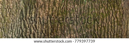 Embossed texture of the brown bark of a tree with green moss and lichen on it. Expanded circular panorama of the bark of an oak. #779397739