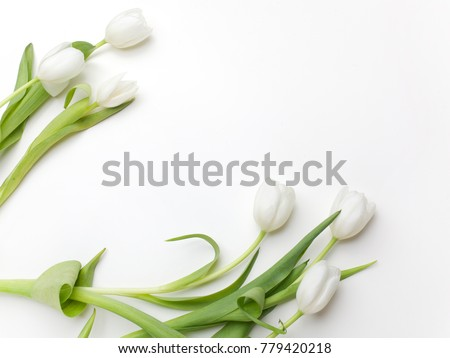 White Tulips on white background. Top view #779420218