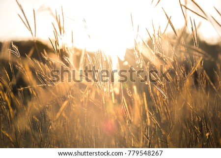 Blurred Pasture at sunset. It is lands in narrow sense are enclosed tracts of farmland grazed by domesticated livestock. In pasture land consists mainly of grasses legumes and fodder. It beautiful sun #779548267