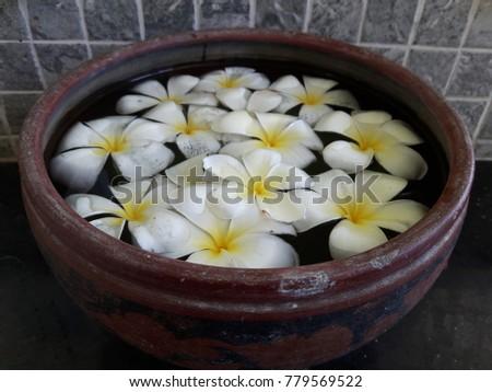 Plumeria flower floating in water. #779569522
