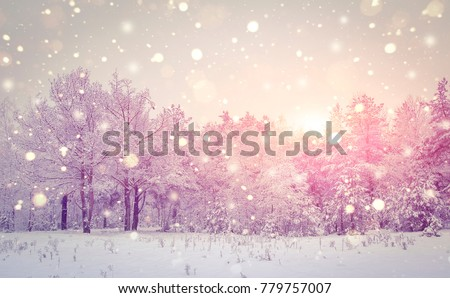 Winter nature landscape. Christmas background. Snowflakes shining at sunrise. Beautiful frosty winter morning. Snowfall in snowy magic forest.