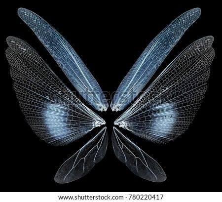 Insect wings isolated on black background #780220417