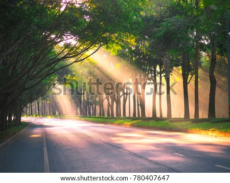 Sunlight through trees #780407647