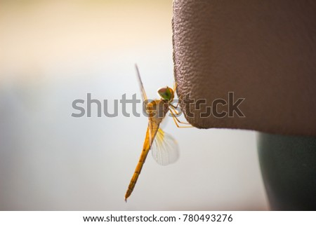 Dragonfly is sitting on car seat.
