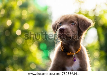Happy Adorable brown Labrador retriever puppy with bokeh leaf abstract background. Cute smile canine at green tree leaf during sunset with copy space for text. 2018 year of dog in Chinese calendar. #780539341
