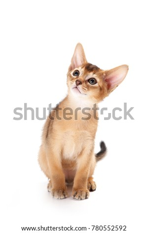 Redhead kitten Abyssinian playing (isolated on white) Royalty-Free Stock Photo #780552592