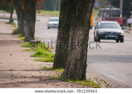 trees growing side by side of the road on which city transport travels #781230961